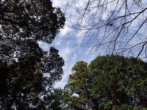 米山薬師の山頂で眺める空