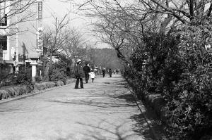 四十年前の鎌倉の段葛