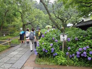 駆け込み寺の東慶寺の紫陽花